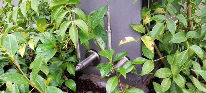 plant-selection-for-green-facades