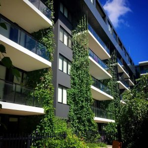 maintenance plan for a green facade