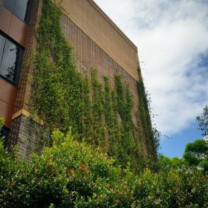 What is the Definition of a Green Facade? / Tensile Design & Construct