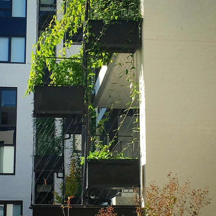 The Cost Benefit of Green Facades and Living Walls / Tensile Design & Construct
