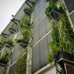 5 Factors that Impact the Longevity of a Green Wall / Tensile Design & Construct