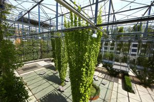 How Stainless Steel Ropes and Mesh Support a Green Facade / Tensile Design & Construct