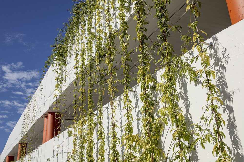 "Why Green Facade Maintenance is Not ""Set and Forget"" / Tensile Design & Construct"