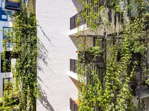 3 Misconceptions About Waterproofing for Green Facades / Tensile Design & Construct