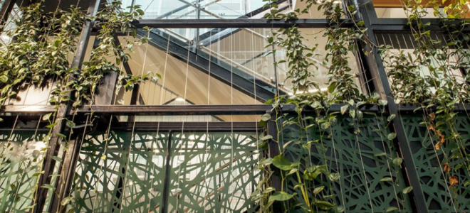 Benefits of Wire Trellis Systems for Green Facades and Walls / Tensile Design & Construct