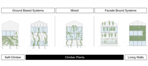 Green Facade Types: The Differences Explained / Tensile Design & Construct