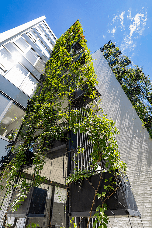 Light and Weather Considerations for Vertical Green Walls / Tensile Design & Construct