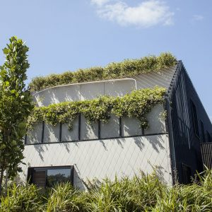 Green Facades as Barriers: Fall Protection and Aesthetics / Tensile Design & Construct